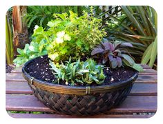 How to Make a Tabletop Herb Garden