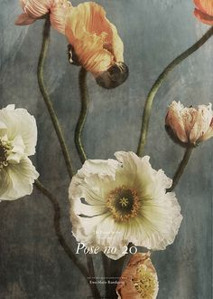 Poppies Poster - Ewa-Marie Rundquist