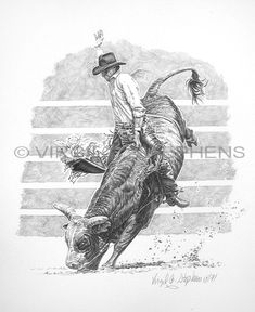 Bull Riding Drawings | Bull Riding pencil drawing by western artist Virgil C. Stephens