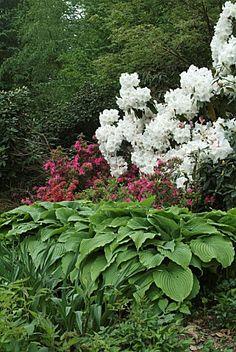 Hosta, Rhododendron, Park Flower of Haute Bretagne, Island and Vilaine...?