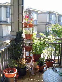 Pamba Boma: Creating a Small Balcony Garden