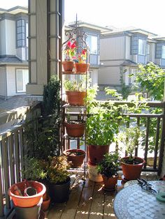 Pamba Boma: Creating a Small Balcony Garden  Suka deh sama tempat pot susunnya :)