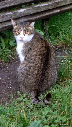 chat de Torcello