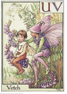 Illustration for the Vetch Fairy from Flower Fairies of the Alphabet. A boy fairy sits on a vetch plant with his right arm round a small boy fairy sitting next to him. The small boy has the letter U printed on his shirt.  										   																										Author / Illustrator  								Cicely Mary Barker