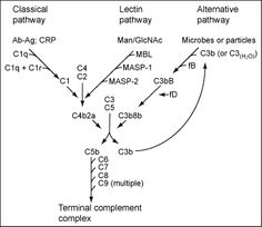 The Complement System Concept Map.62 Best Medicine Immunology Images Immune System Medical