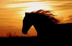 Beautiful Running Horse Silloette