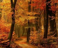 Autumn Path, The Netherlands