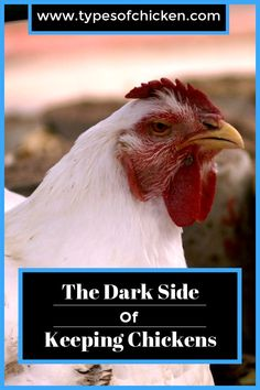 The Dark Side Of Keeping Chickens — Types of Chicken