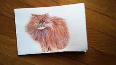 Gatto persiano su bigliettino   -   Acquerello e matite