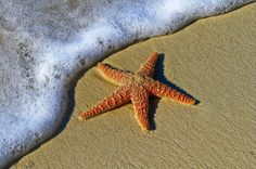 This starfish from the Sea Life collection is feeling awesome. It's getting a tan and enjoying the sun. Isn't it an example to follow?