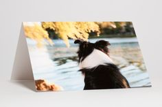 Dog by the Lake, by Jacque Pollitt, Light box photo