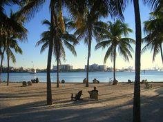 A beautiful shot through Palm Trees of South Beach! #SouthBeach #Florida #Miami South Beach, Miami Beach, Miami Florida, Florida Beaches, Beach Fun, South Florida, Florida Bay, Parasailing, Key West