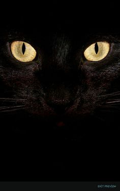 Kara kedi ne kadar belli yaa ❤
