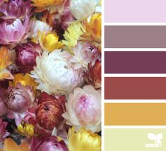 Straw Flower Hues - http://design-seeds.com/index.php/home/entry/straw-flower-hues2