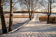 #Finland at -15 degrees. Great warm light on the morning #walk. More photos in my gallery: http://www.snaphub.pl/galerie/panasonic-lumix-g6-mrozna-finlandia