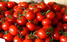 By Jodie Perry One of the most satisfying feelings of home gardening is to harvest a bumper crop of beautiful tomatoes at the end of the season. Tomatoes are one of the most popular plants grown by…