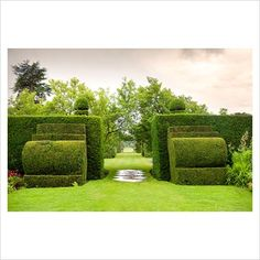 Heading towards the Ilex avenue through a clipped Taxus - Yew hedge with Yew finials designed by Rowland Egerton-Warburton and planted in 1856 - Arley Hall, Cheshire, early July
