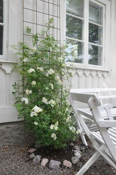 Again, a beautiful trellis and a viney plant. Always my fav. Again, a beautiful trellis and a viney Rose Trellis, Garden Trellis, Farmhouse Garden, Garden Cottage, Pinterest Garden, White Gardens, Terrace Garden, Clematis, Dream Garden