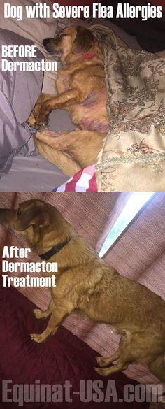 Give Flea Medicine After Dog Has Flea