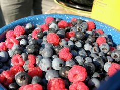 Berry Consumption Linked to Lower Parkinson's Risk