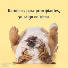 Spanish Memes, Spanish Quotes, Best Quotes, Funny Quotes, Funny Memes, Qoutes, Life Quotes, Panda Bear, Sarcasm