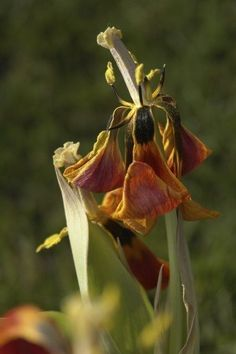 Deadheading Flowers - How And Why to Remove Dead Flowers From Plants