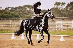 Here's another great horsey Halloween costume idea! Horses And Dogs, Show Horses, Animals And Pets, Cute Animals, All The Pretty Horses, Beautiful Horses, Animals Beautiful, Horse Halloween Costumes, Pet Costumes