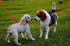 Die 4 Konfliktstrategien des Hundes jetzt im Überblick! Erfahre mehr über das Thema im Haustier Notfallkarte Hunde Blog!