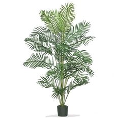 This polyester silk tree by Paradise Palm provides a dominating, tropical accent to any and every living space. This paradise palm silk tree features realistic characteristics that promise a full, tro Potted Trees, Palm Trees, Hanging Plants, Indoor Plants, Silk Tree, Illustration Vector, House Illustration, Illustrations, Decorative Planters
