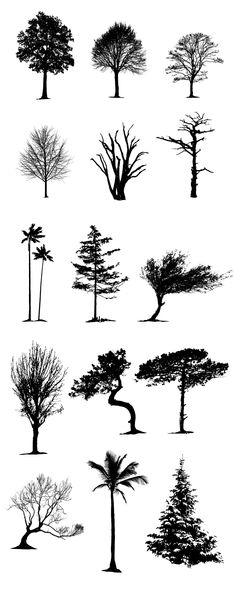 #Vector Tree #Silhouettes Pack