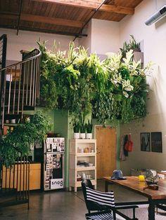 Inspiratie: grote plant