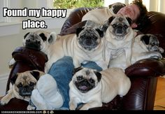 i wants a pile of pugs :(