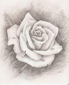 pencil drawn rose - Google Search
