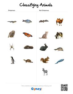 Get the most out of your smart board. Classifying Animals, Animal Classification, Keys, Pdf, Activities, Unique Key, Key
