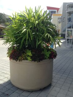 Planter at Downtown Disney. Galvanized Planters, Planter Pots, Downtown Disney, Hanging Baskets, Flower Containers, Plants, Courtyards, Fall Hanging Baskets, Planters