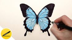 How to Draw a Butterfly Step by Step ✿ Easy Drawing Tutorial   Step-by-step drawing tutorial. In this video, you will learn how to draw a butterfly and color it with colored pencils, step by step. Learn to draw a beautiful butterfly. Drawn simply and without unnecessary words, everything is clear even for beginners.