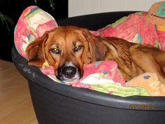 Mischling Lola  Meine Augenlider sind so schwer. Das kann so 12 Stunden dauern bis die wieder aufklappen.       Mehr lesen: http://d2l.in/4r  dogs2love - Gassi gehen zum Verlieben. Partnerbörse für alle, die Hunde lieben.  Bild, Dating, Foto, Hund, Partner, Rasse, Single