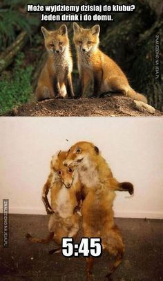 Może wyjdziemy dzisiaj do klubu?Go home fox your drunk Funny School Jokes, Stupid Funny Memes, Wtf Funny, Weekender, Funny Animals, Cute Animals, Funny Pictures Can't Stop Laughing, Dark Art Drawings, Meme Pictures
