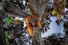 2020 World Nature Photography Awards Winners Natural Park, Natural World, Photography Awards, Nature Photography, Animal Photography, Bornean Orangutan, Great Horned Owl, Gardens By The Bay, Game Reserve