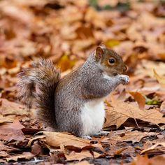 """164 Gostos, 26 Comentários - Rita Jorge   T R A V E L (@episodesofatrip) no Instagram: """"No parque de St. James é possível passear junto destes esquilos simpáticos!  Follow…"""" Animals, Instagram, Chipmunks, Park, Animales, Animaux, Animal, Animais"""