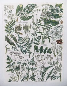 Botanical Illustrations  - vintage botanical flower drawings - old botanical prints of flowers - green and white