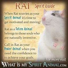 In-depth Mouse Symbolism & Rat Meanings! Rat as a Spirit, Totem, & Power Animal. Plus, Mouse in Celtic & Native American Symbols & Rat Dreams! Spirit Animal Totem, Animal Spirit Guides, Your Spirit Animal, Animal Totems, Native American Zodiac Signs, Native American Symbols, American Indians, Animal Meanings, Scouting