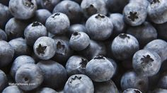 Blueberries shown to boost brain activity in advanced Alzheimer's patients - NaturalNews.com