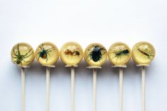 Insects edible image lollipops by Vintage Confections
