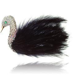 Wilfredo Rosado's black swan