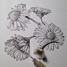Image via We Heart It https://weheartit.com/entry/152169795 #draw #flowers #platns