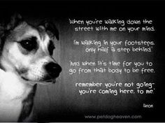 Loss Of A Dog Quotes 13 Dog Loss Quotes Comforting Words When Losing A Friend