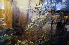 Diane_fox_unnatural_history_int_5_dogwoods__carnegie_museum_of_natural_history__pittsburgh__pennsylvania_2013_14
