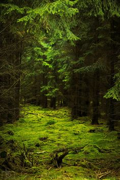 """Dark Forest, Germany photo by patrick Now I see where the characters in all those """"fairy"""" tales came from!"""