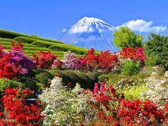 http://www.fotosefotos.com/page_img/12705/jardim_grande_na_montanha